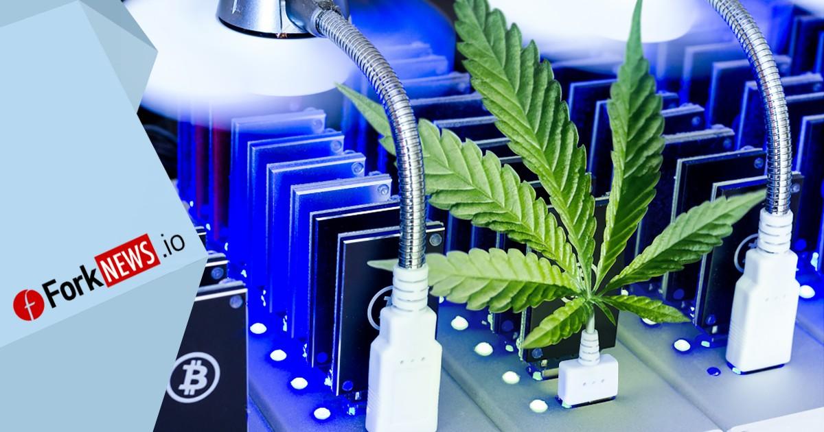 Майнинг поможет компании LGC Capital Ltd. выращивать марихуану