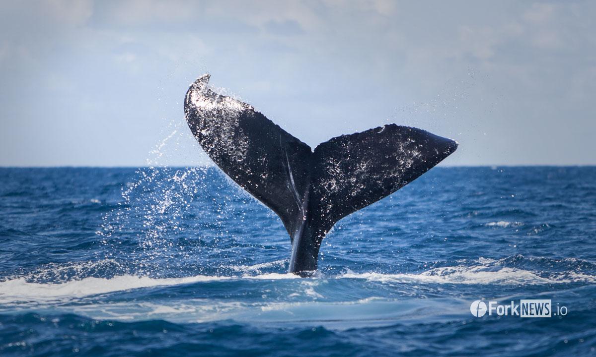 Настоящие киты торгуют ВТС на внебиржевом рынке на 12 миллиардов долларов в день